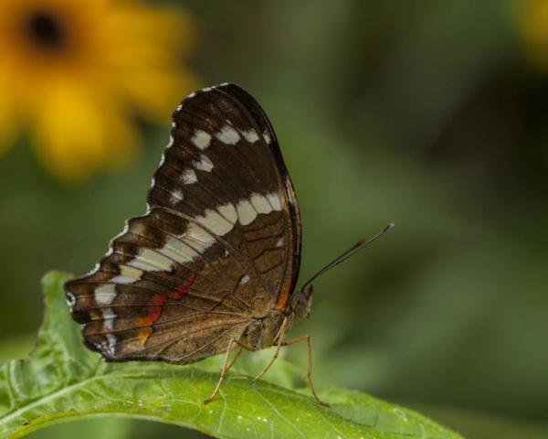 Butterfly, Pat Berrett