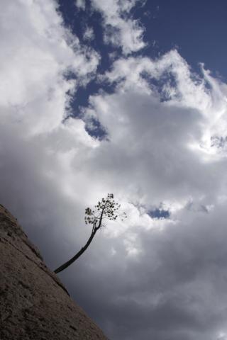 Tree, Pat Berrett