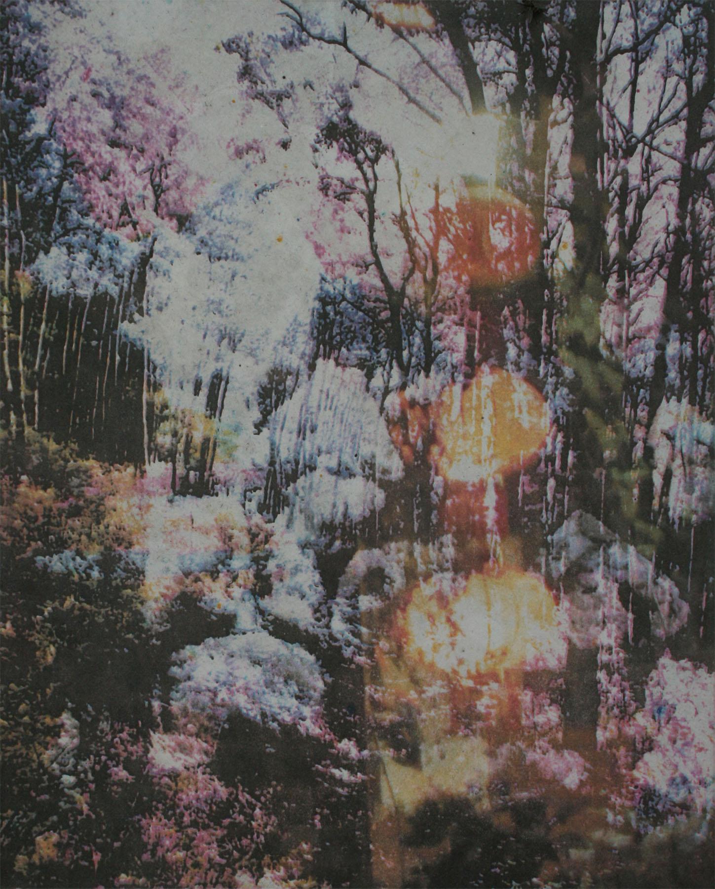 The Veil of Wildness, Jessica Weybright