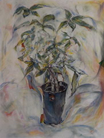 Carol Felley, Intersection of Light