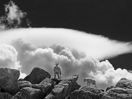 Joan Fenicle: Rocky Mountain High