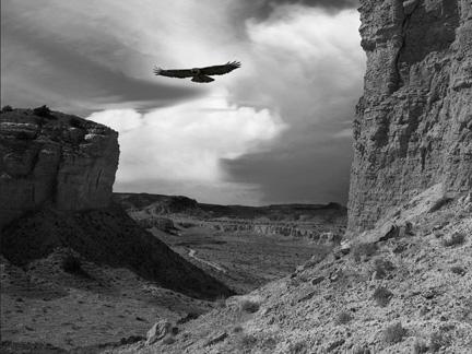 Joan Fenicle: Birds Eye View
