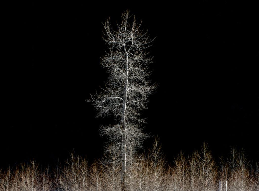 Stan Ford: Alone in Winter