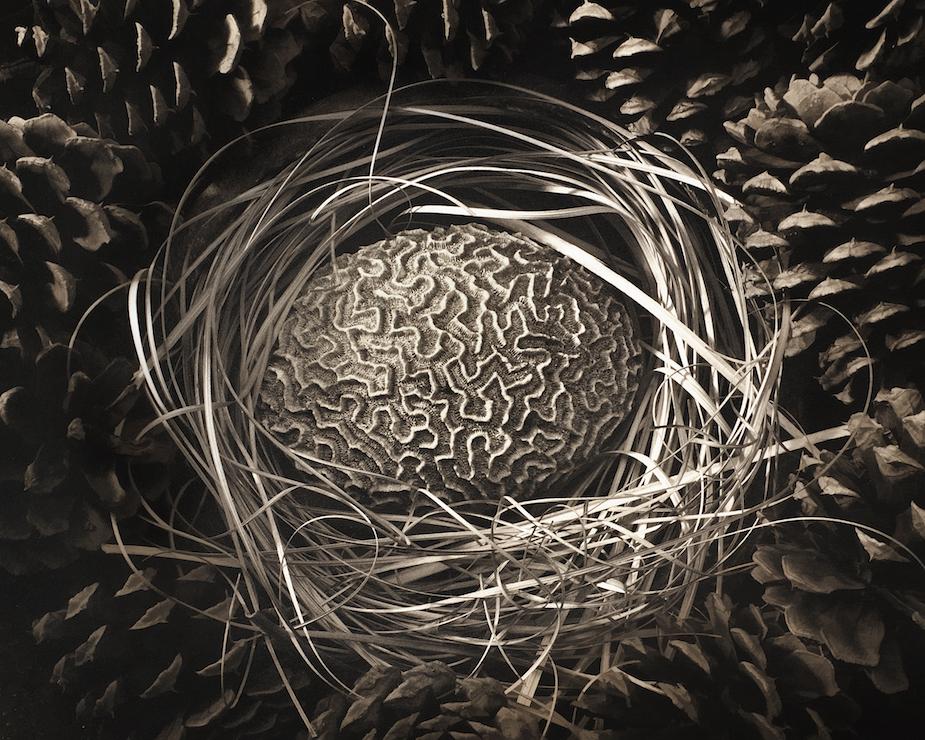 David Hoptman: Coral Nest