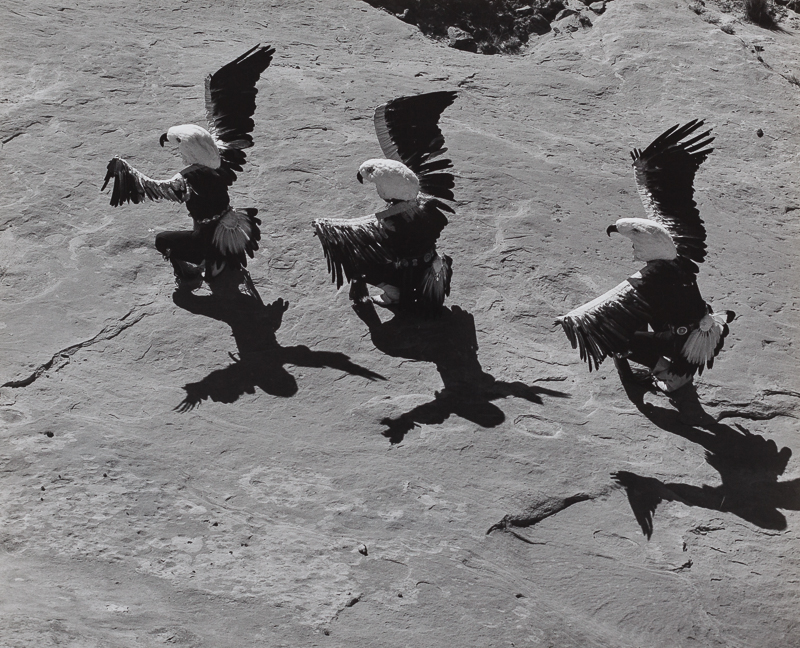 Lee Marmon: Eagle Dancers (Laguna)