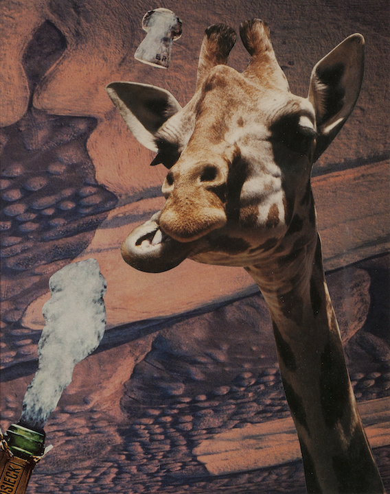 Deborah Openden: Giraffe Pops His Cork