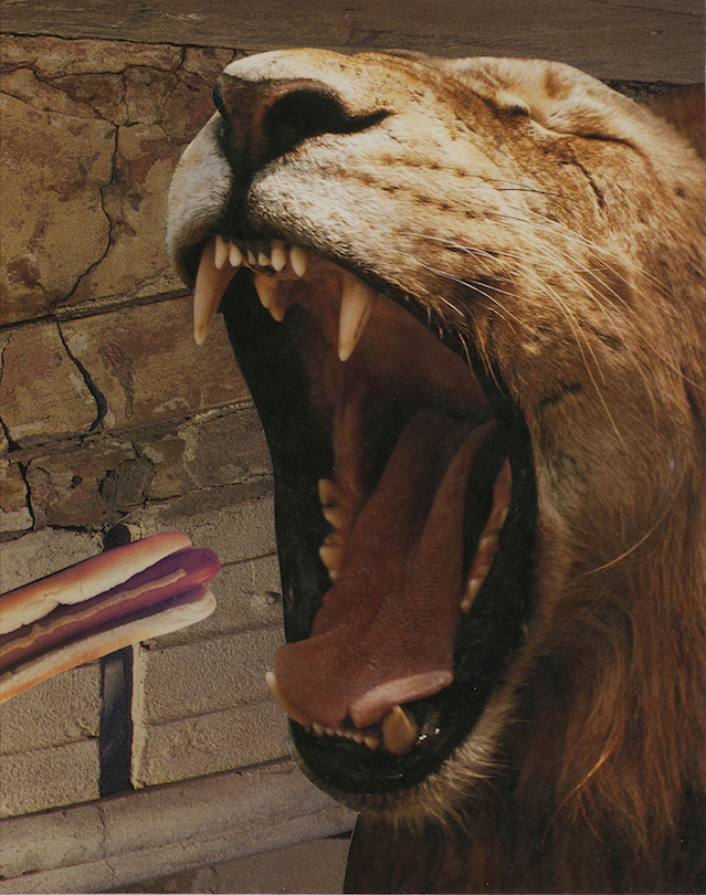 Deborah Openden: Lion Eats a (Hot) Dog