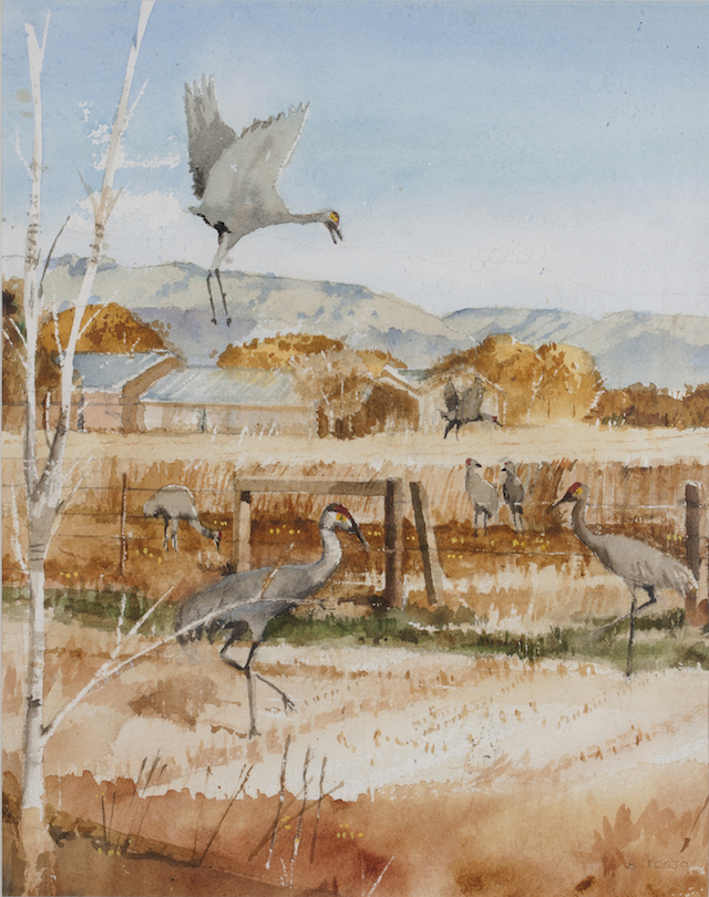 Robert Ponto: Sandhill Cranes 1