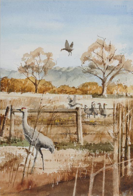 Robert Ponto: Sandhill Cranes 2
