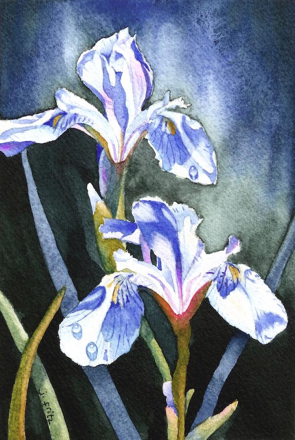 Jane Fritz: Rocky Mountain Iris 2