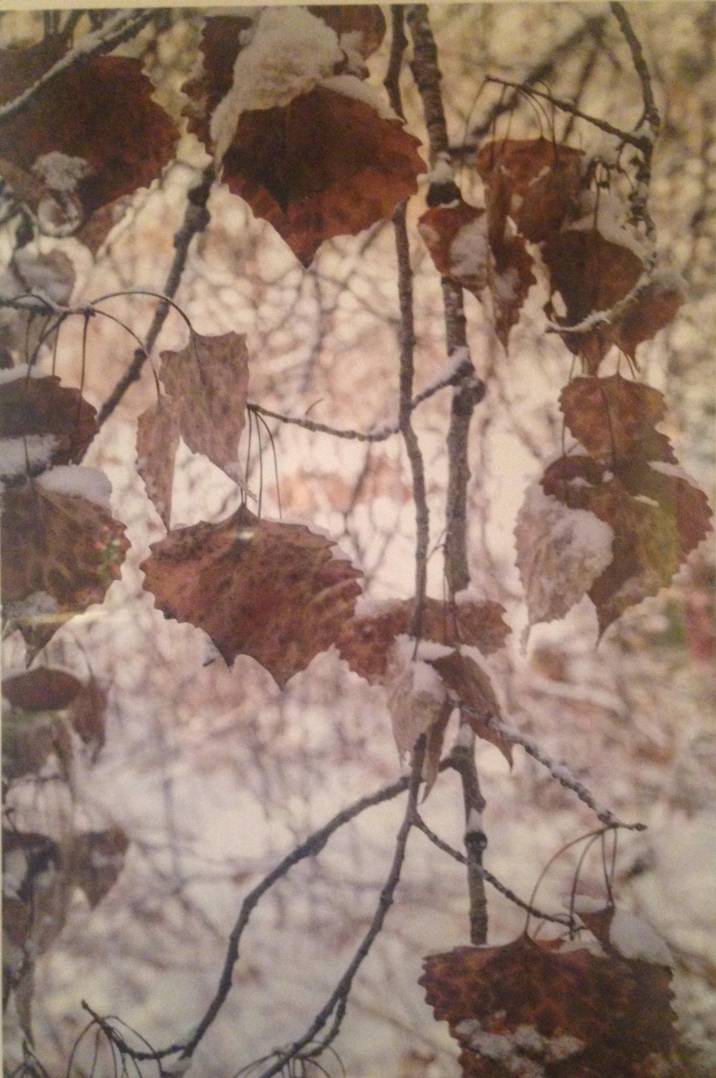 Hans Gebhardt: Brown Leaves
