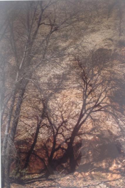 Hans Gebhardt: Tree Shadows