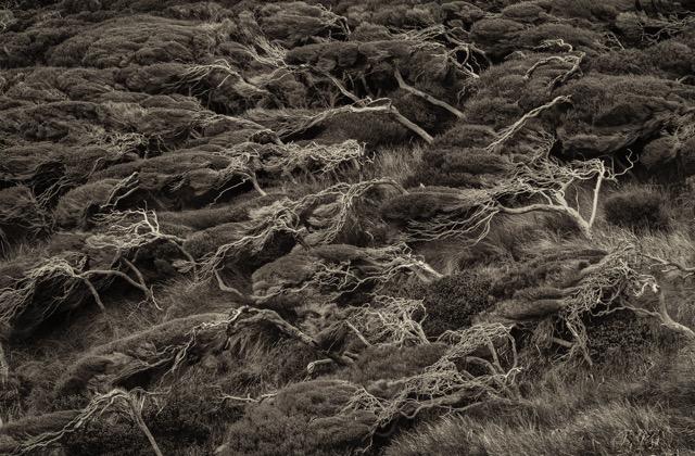 Hans Gebhardt: Wind/Bush