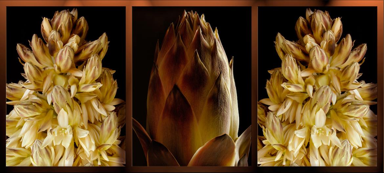 Fernando Delgado: Palm Yucca Triptych