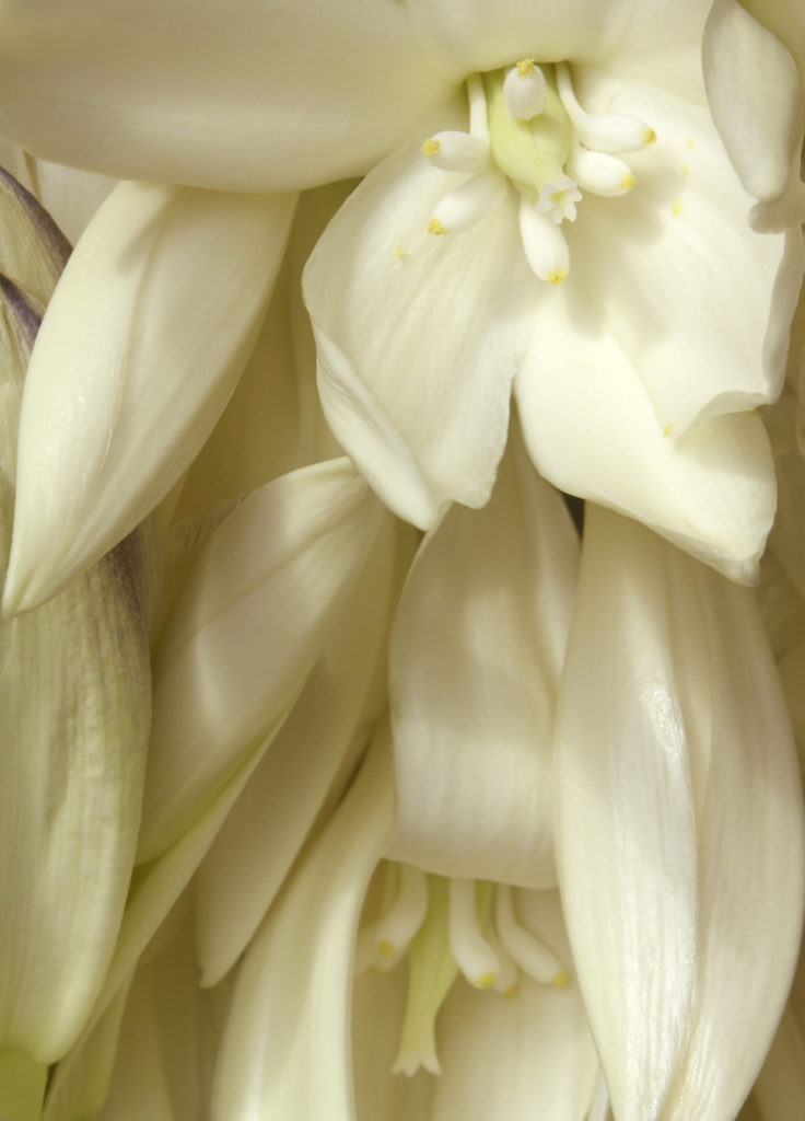 Fernando Delgado: Yucca Bloom