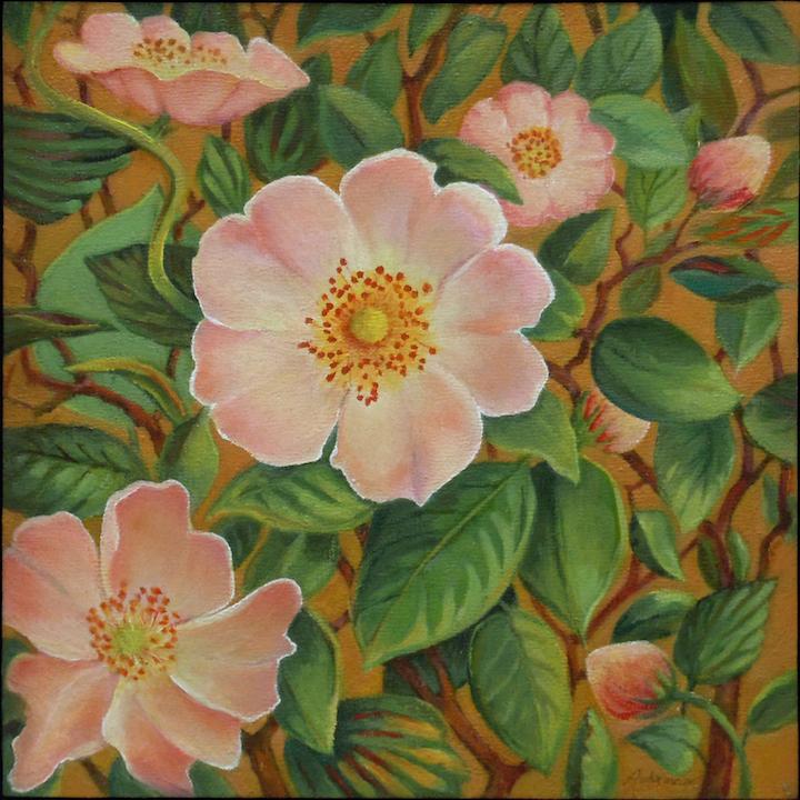 Carol L. Adamec: New Mexico Wild Roses