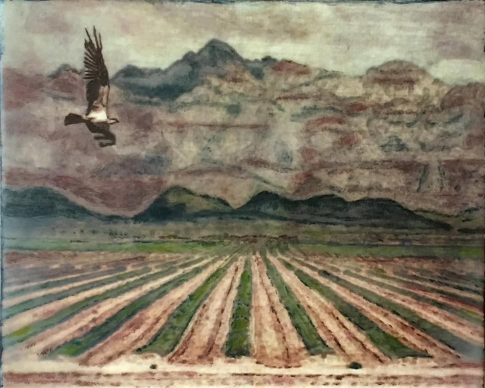 Carol Mell: Desert Hawk