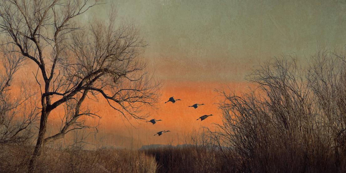 Carol Mell: Five Cranes