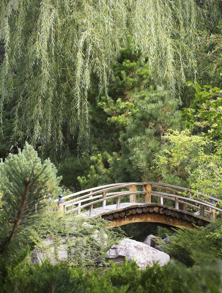 Jeremy Stein: Japanese Garden Bridge
