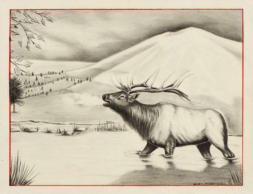 Kevin Castillo: High Country Bull Elk
