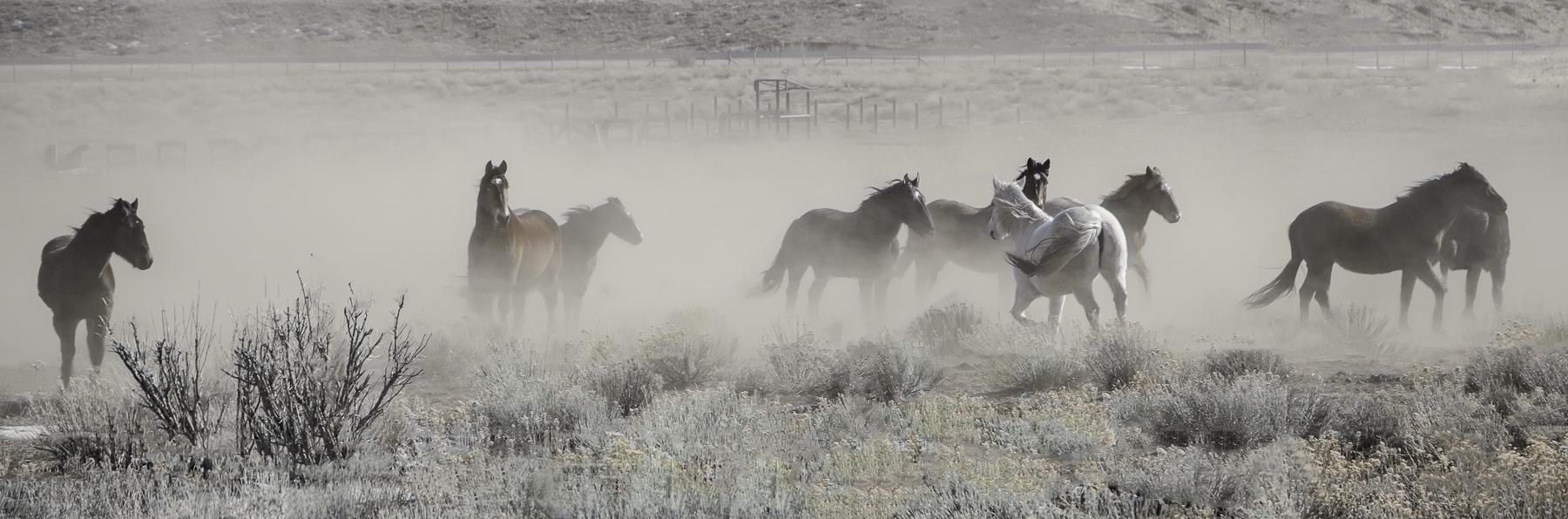 Sandra Lapham: Horses in a Storm