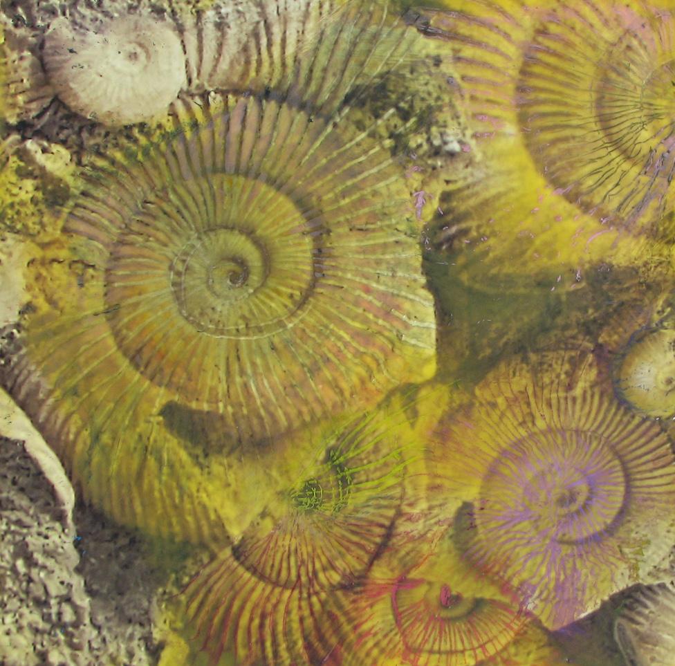 Krista Barrett: Nautilus