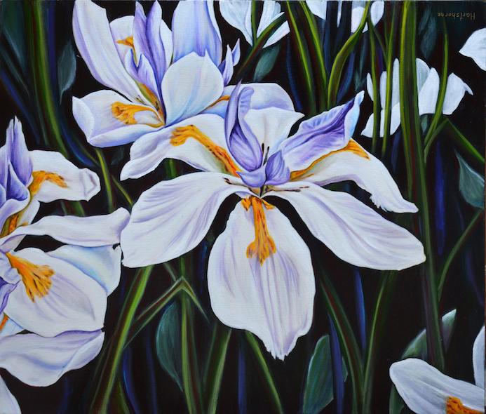 Sarah Hartshorne: Orchids
