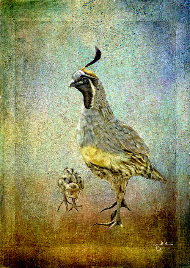 Lyndia Radice: Quail Dad and Baby