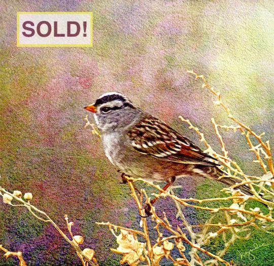 Lyndia Radice: Sparrow Portrait