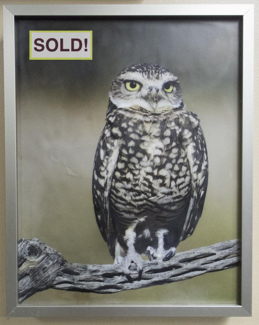Sandra Lapham: Burrowing Owl