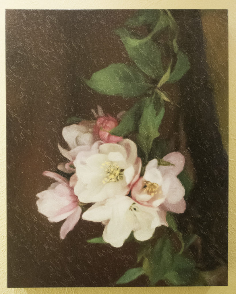 Sandra Lapham: Cherry Blossoms of Spring