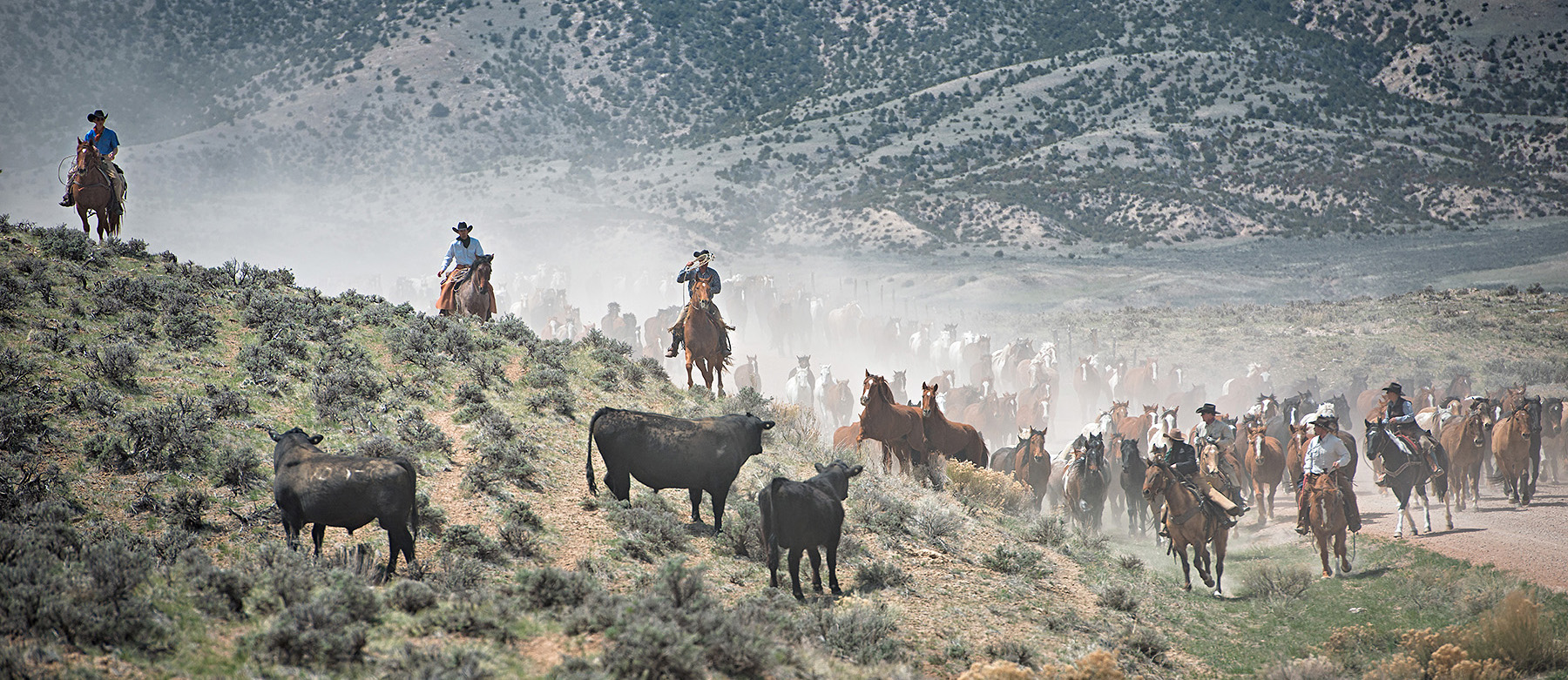 Sally Thomson: American Horse Drive