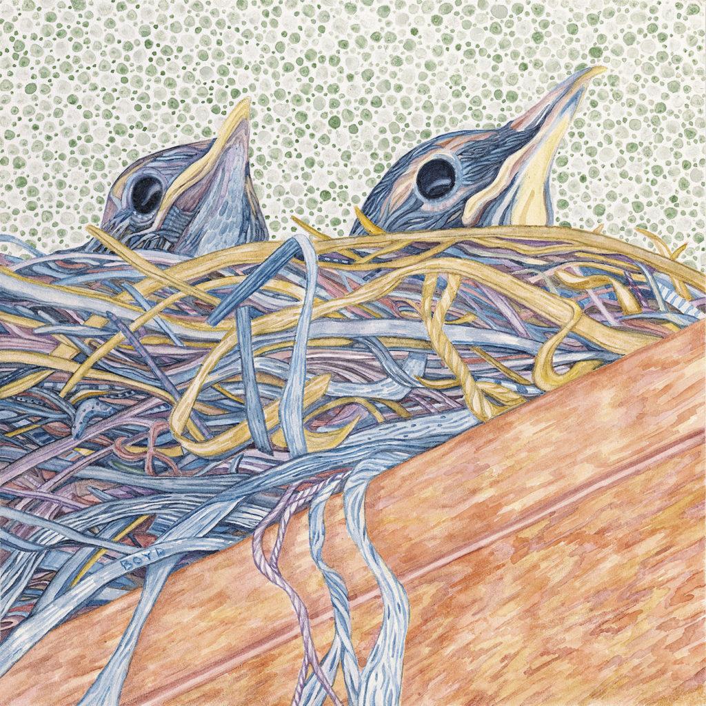 Judy Boyd: American Robins
