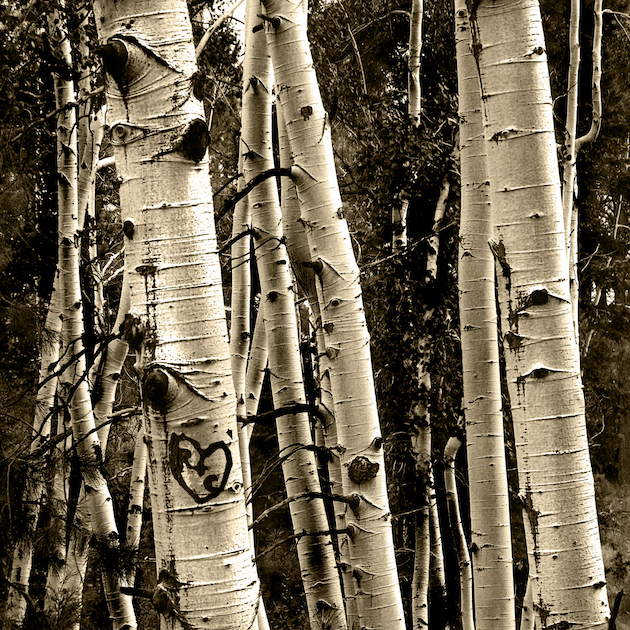 Joan Fenicle: Aspen Love