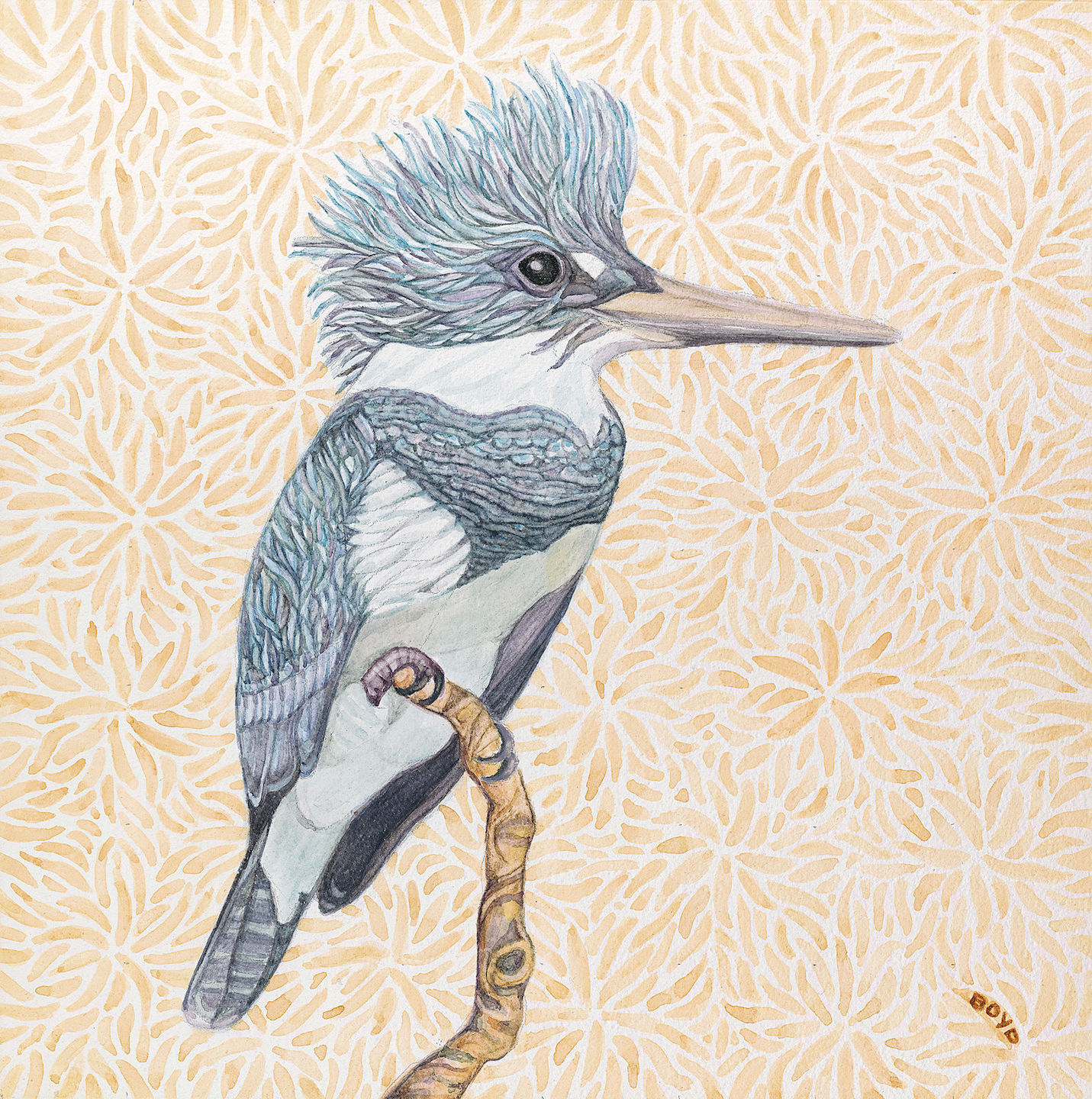 Judy Boyd: Belted Kingfisher
