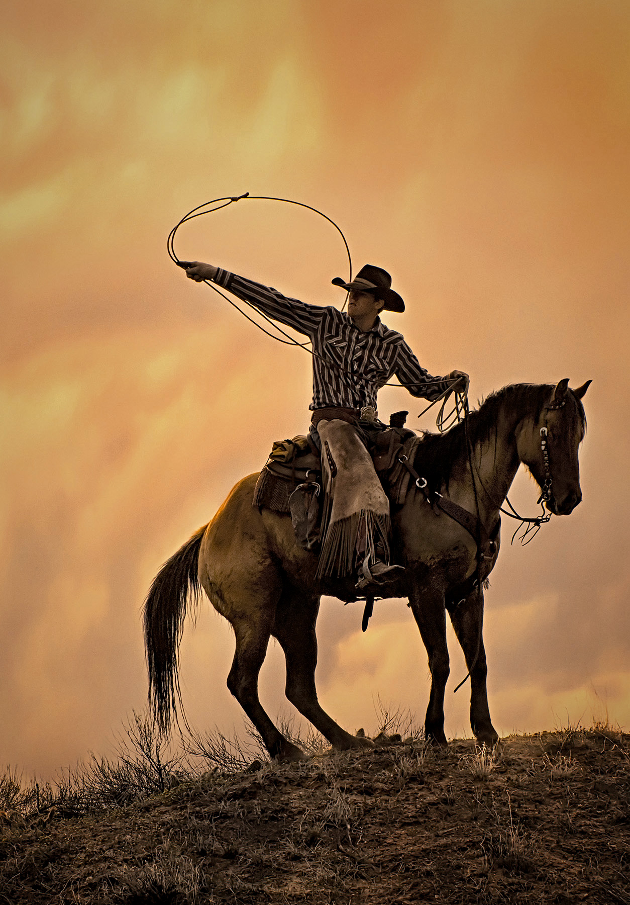 ally Thomson: Cowboy Dreams