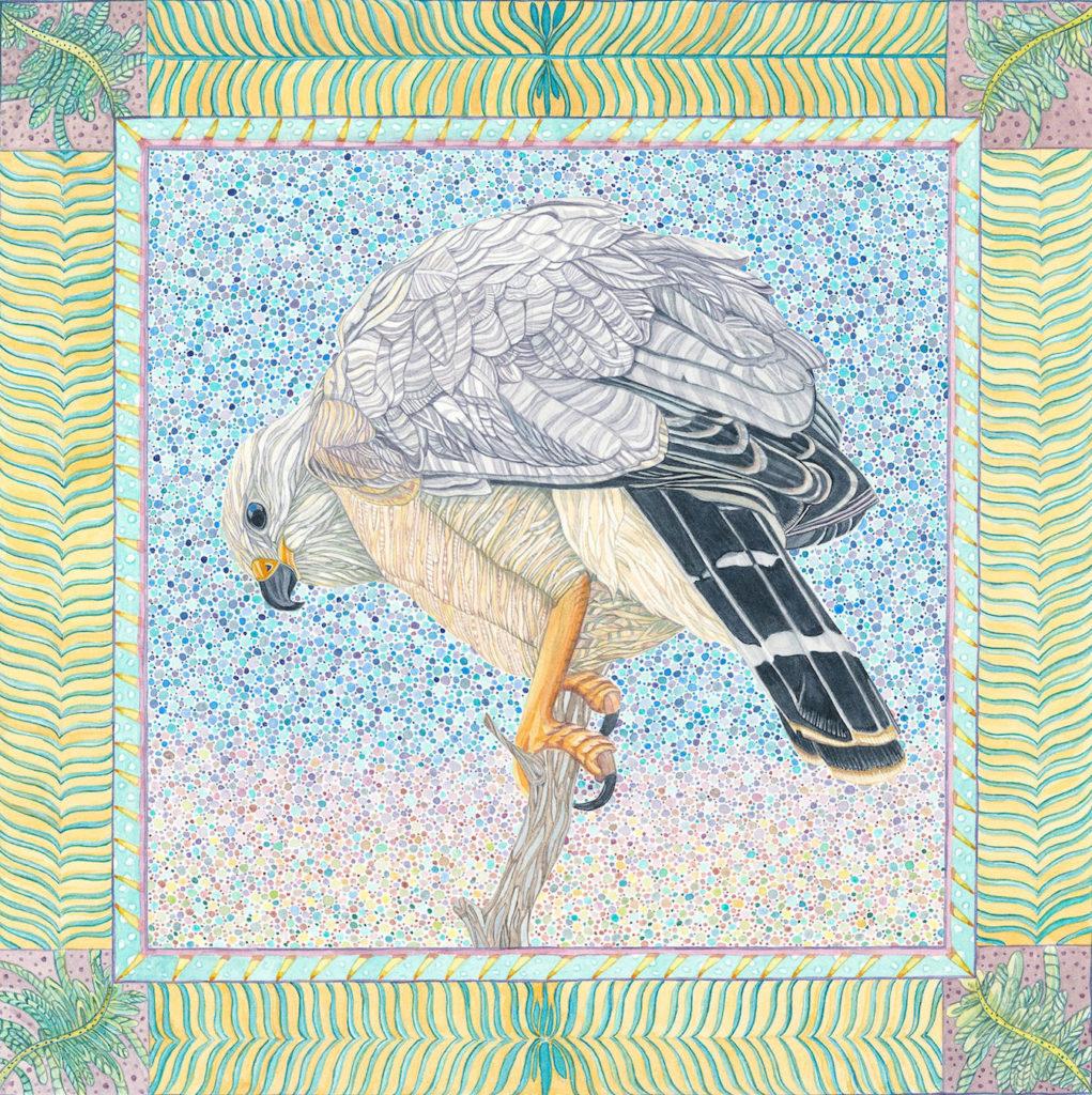 Judy Boyd: Gray Hawk