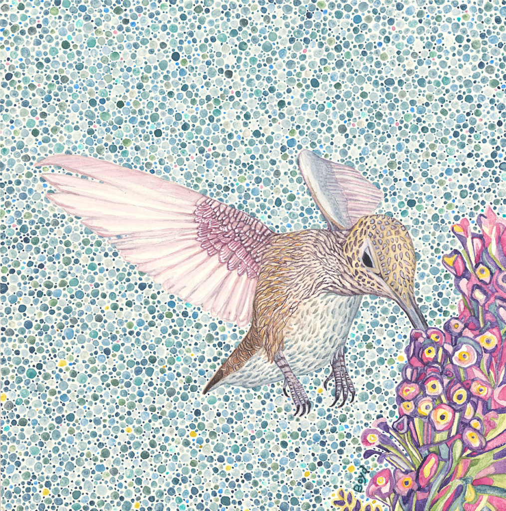 Judy Boyd: Hummingbird w/ Purple Flower