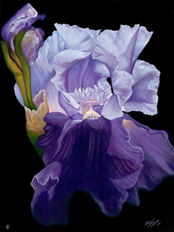 George H Hayes III: Iris Dancers