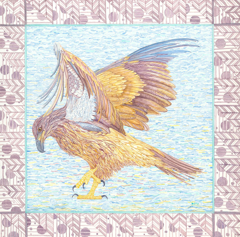 Judy Boyd: Juvenile Bald Eagle