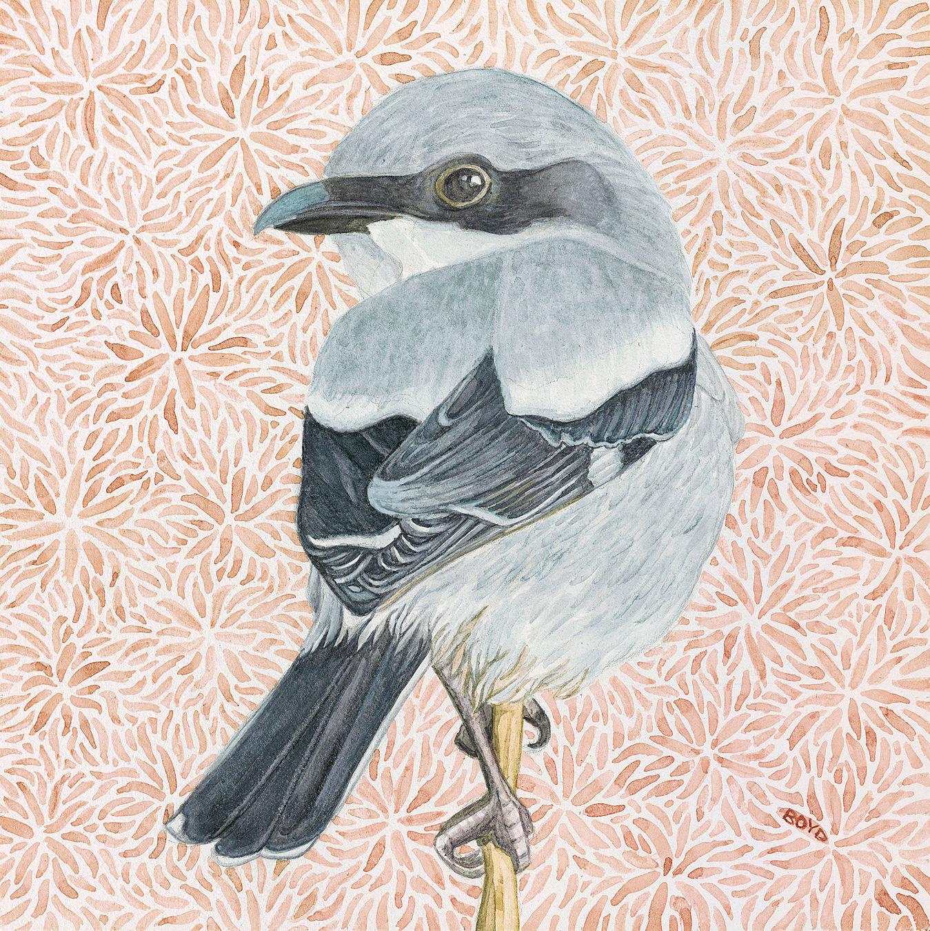 Judy Boyd: Loggerhead Shrike