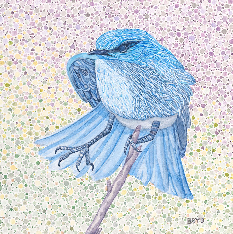 Judy Boyd: Mountain Bluebird