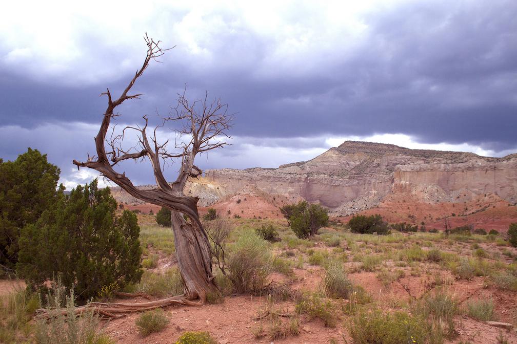 Jeri Burzin: O'Keeffe Tree