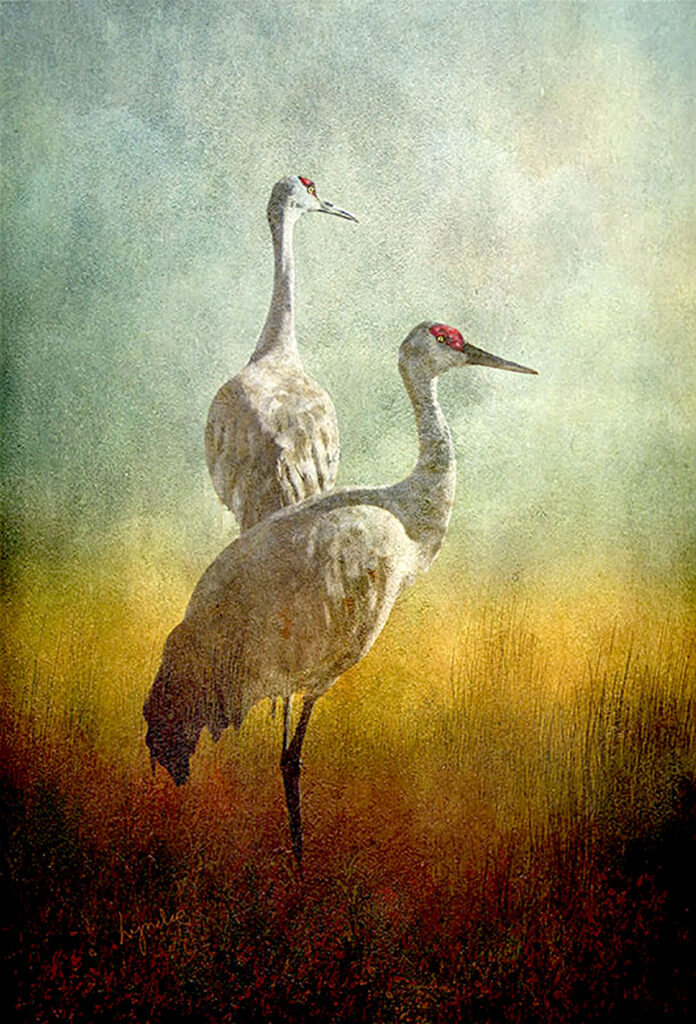 Lyndia Radice: Crane Duet
