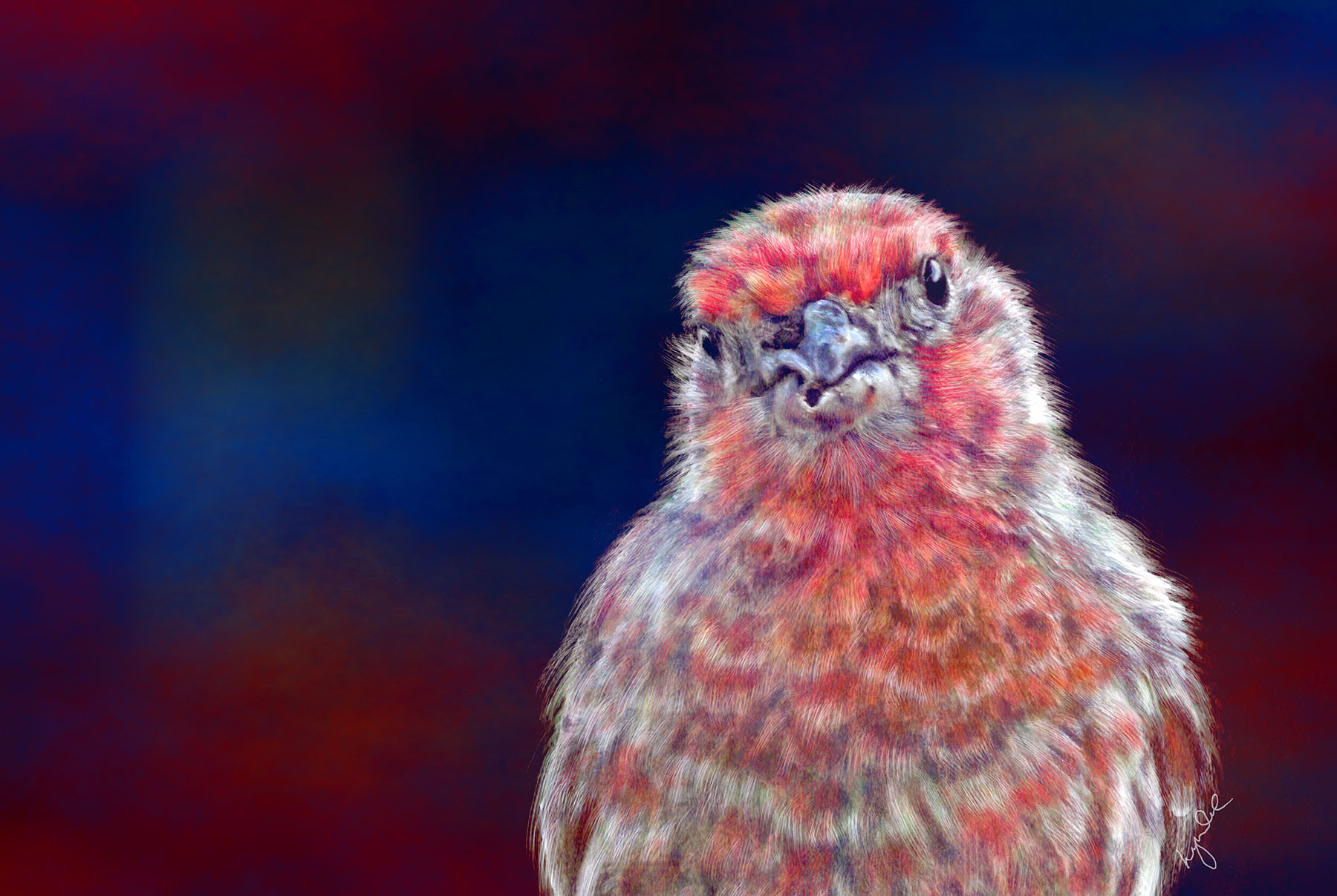 Lyndia Radice: Happy Finch