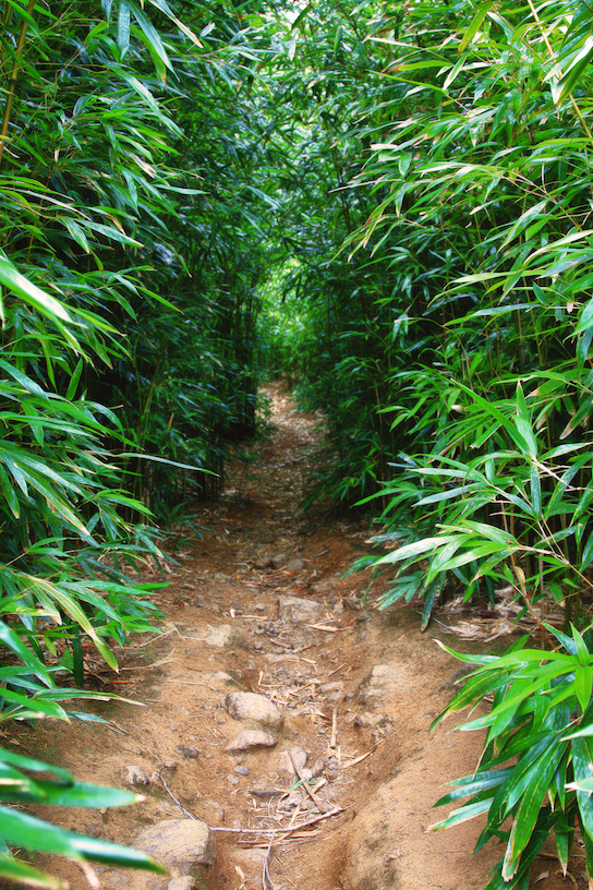 Gale Sutton: Into the Bamboo Forest