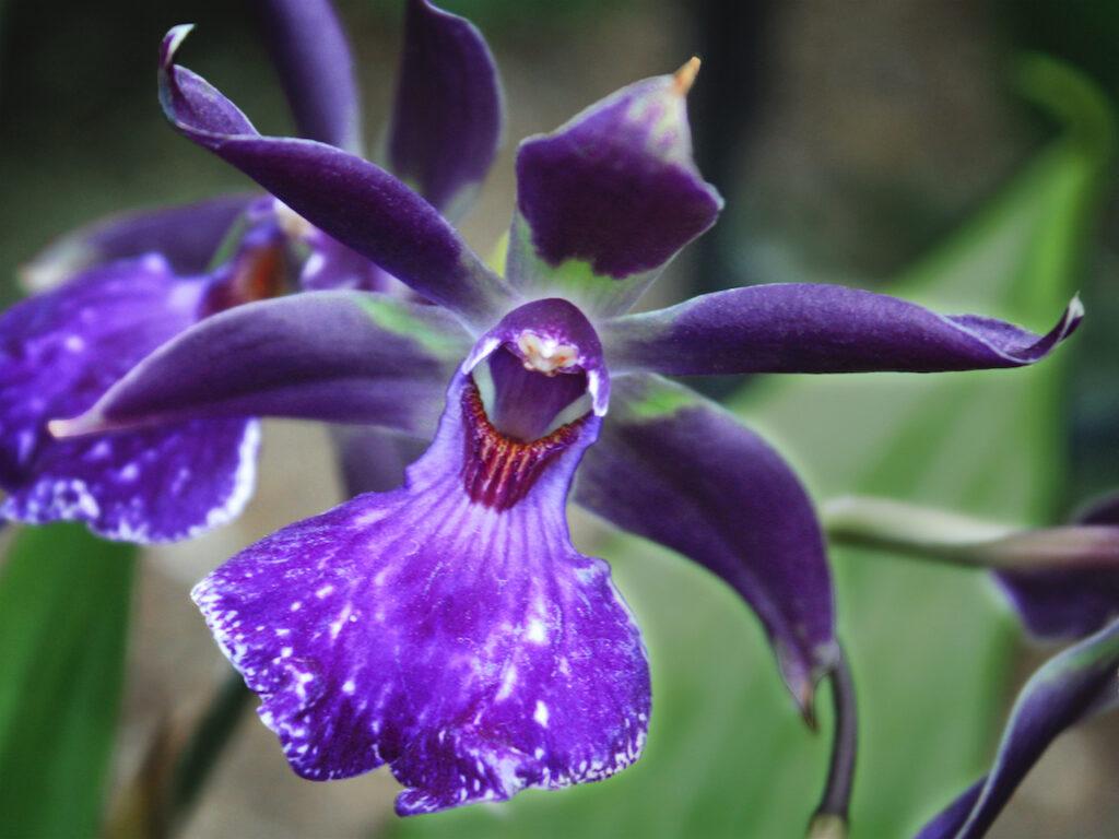 Gale Sutton: Purple Song