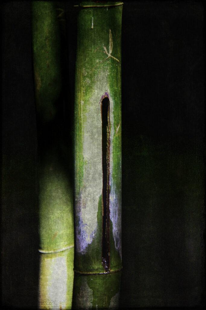 Gale Sutton: Rainforest Flute