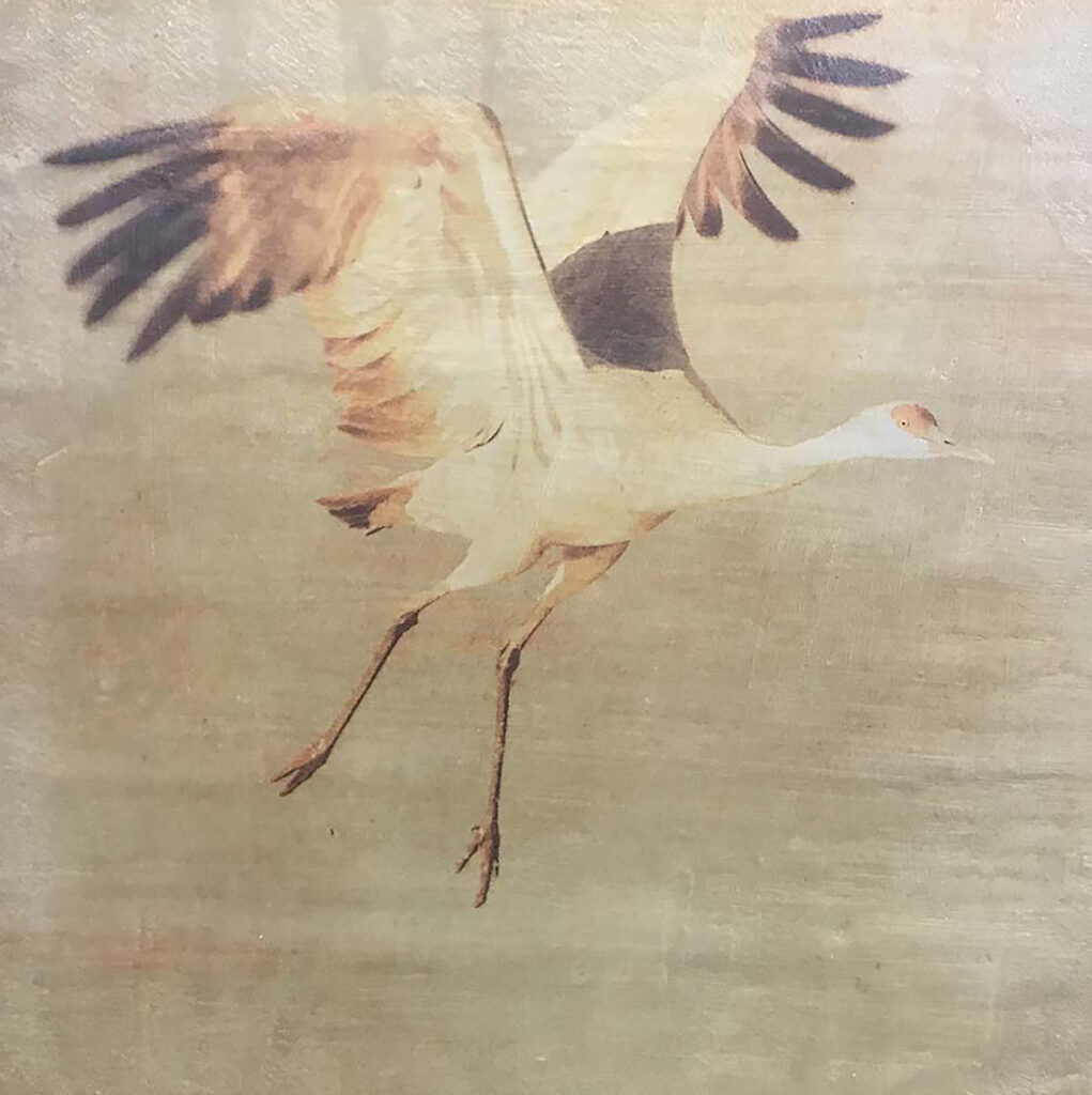 Andrea Sharon: Sandhill Crane Take Off