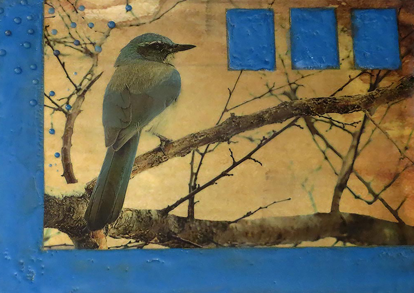 Andrea Sharon: Scrub Jay in Tree